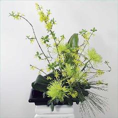 royal chrysanthemum ikebana with forsythia