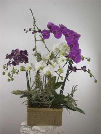 multiple live orchids with branches of Marin County flora, delivered to Belvedere